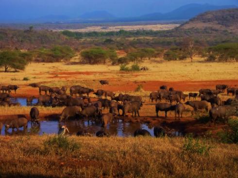 africa-serengeti