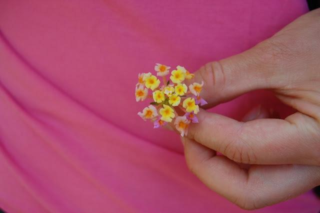 Kukan nimi on swahiliksi yesterday-today-tomorrow. Uloimmat kukat on eilisen kukkia, keltaiset tän päivän ja ihan keskellä on huomisen. Ne vaihtaa väri päivittäin. Tuoksu oli huumaava<3