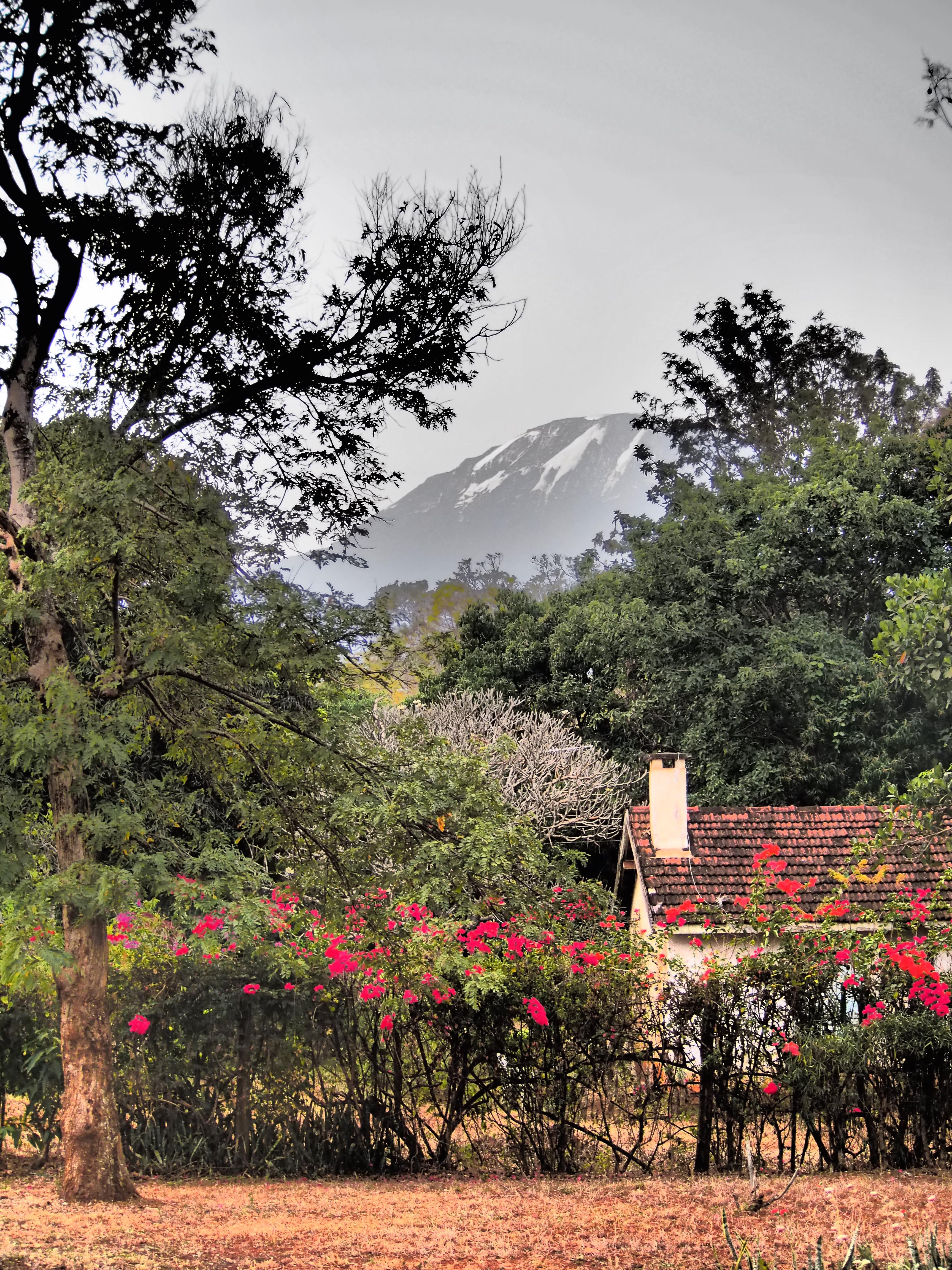 Takapihalta aukee melkosen komee näky, Kilimanjaro