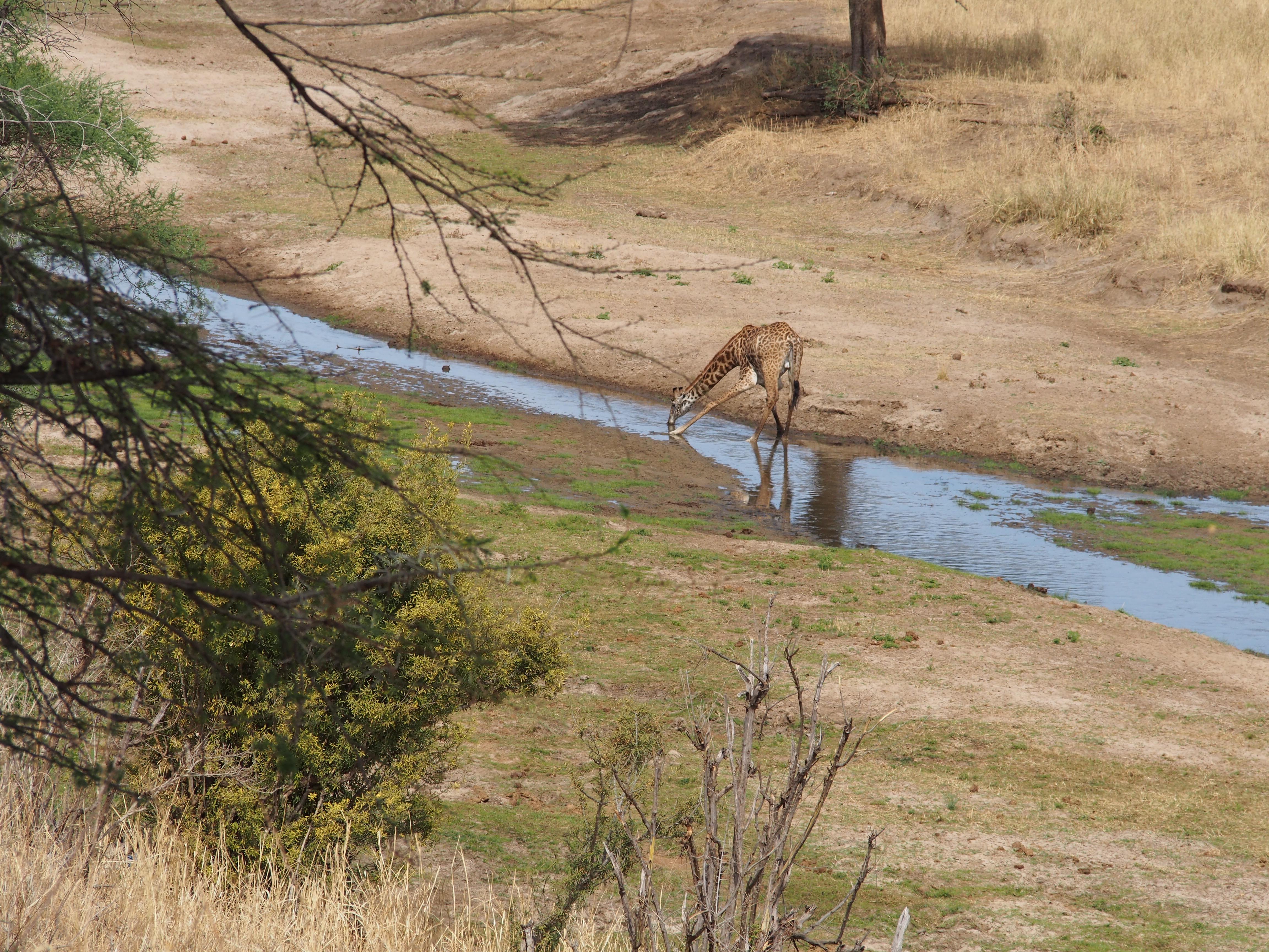 Kuiva kausi on vielä menoillaan ja se kyllä näky. Marraskuusta alkaen vettä pitäin alkaa tuleen niin että soi!