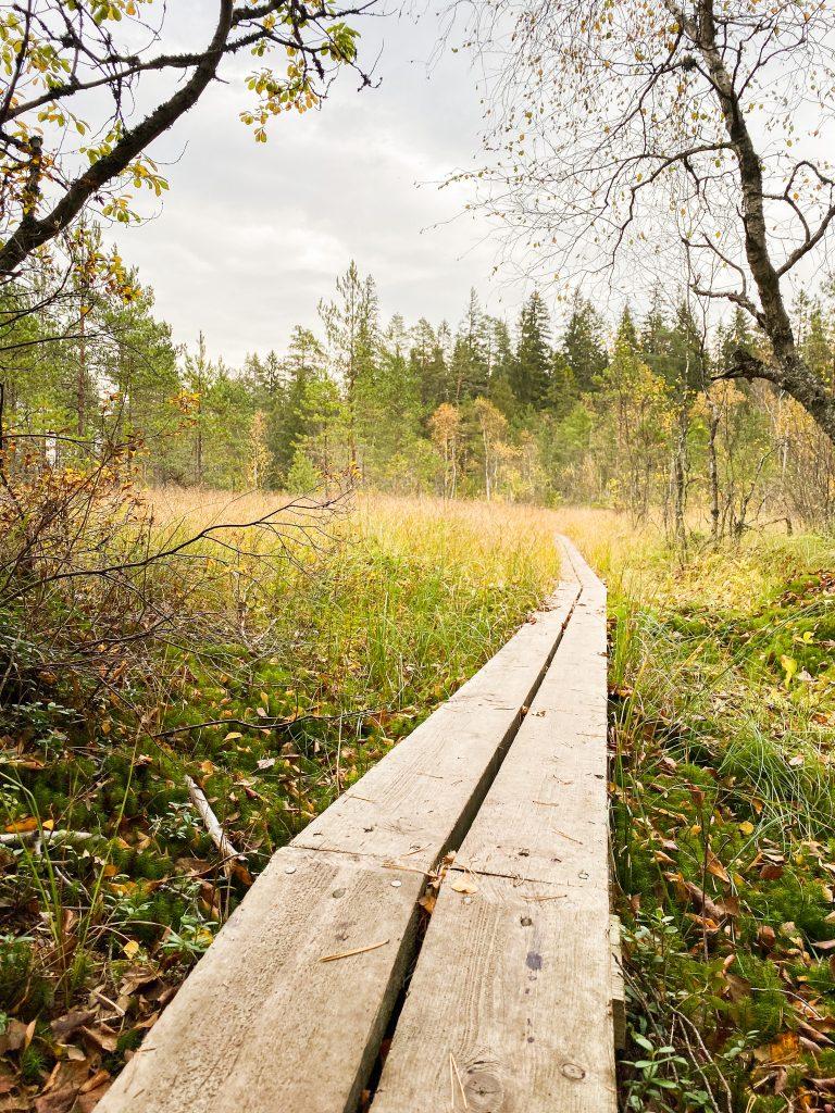 Vajosuon luontopolku Kurjenrahkan kansallispuistossa